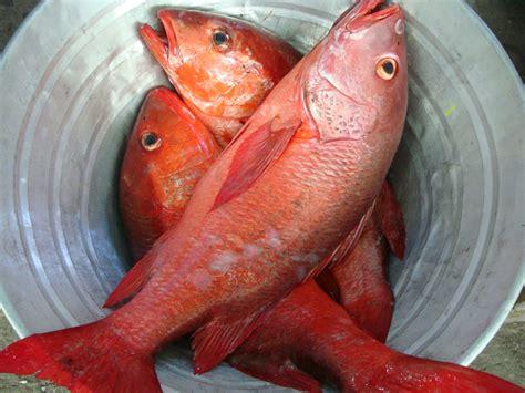 fish pescado chicharr 243 n de pescado fish fritters that will make you a believer peru delights