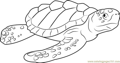 Coloring Page Sea Turtle by Loggerhead Sea Turtle Coloring Pages Color Bros