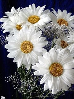 Läuse An Blumen 4425 by гифка ромашки