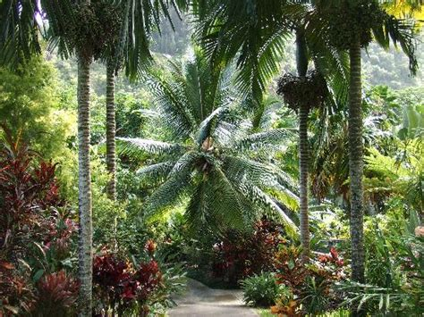 Tropical Gardens Of by Tropical Flower Picture Of Tropical Gardens Of