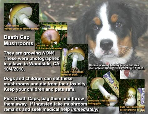 mushrooms for dogs let s be careful out there mushrooms dogs