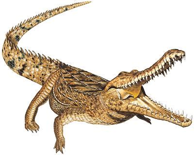 Kaos Crocodile Buaya Hijau Baru fakta fakta unik dari dunia binatang jilid kesatu