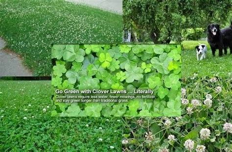 clover lawn and landscape clover lawns kerryg on hubpages rachael edwards