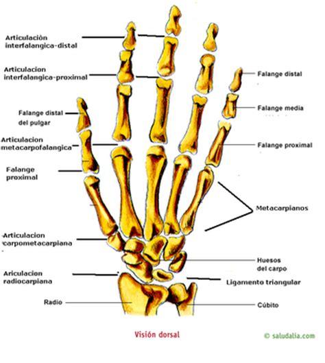 anatomia interna corpo umano anatomia