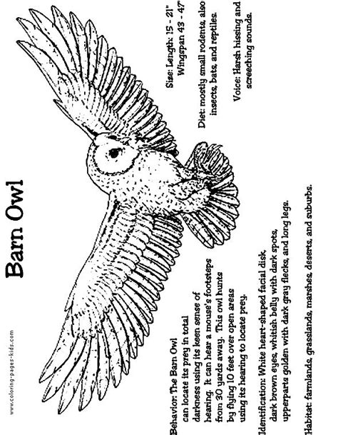 Collection Of Barred Owl Coloring Sheet Sheets Pinterest