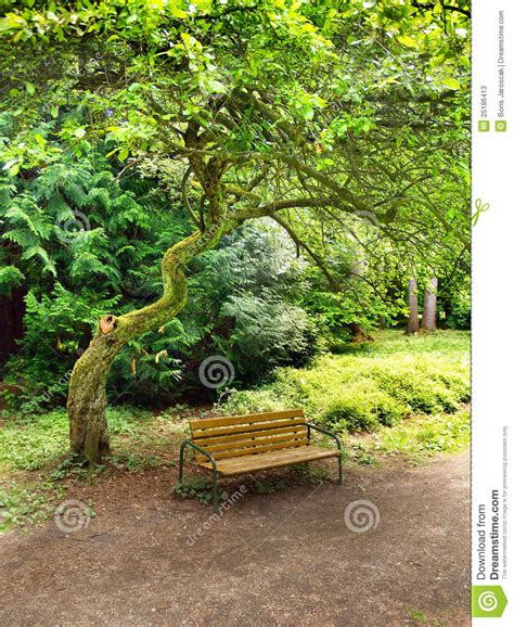 bench under tree bench under tree in park stock photos image 25186413