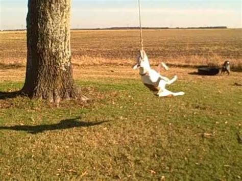 rope swing for sale pit bull rope swing hyperspin youtube