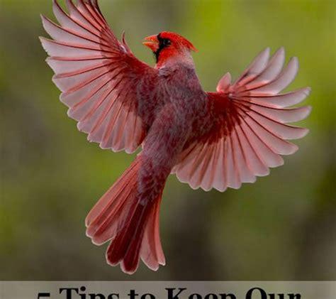best 28 why does a robin keep hitting my window bird