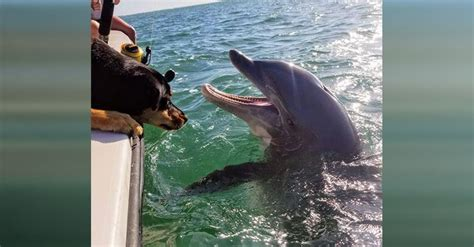 dog boat dolphin dolphin play adorable game of hide and seek with dog on boat
