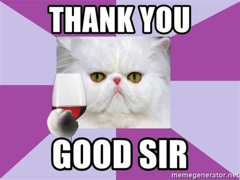 Thank You Cat Meme - thank you cat meme cute cats