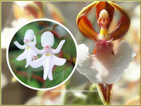 imagenes de flores exoticas para descargar flores ex 243 ticas marta felipe