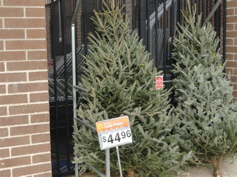 five places to buy christmas trees portsmouth nh patch