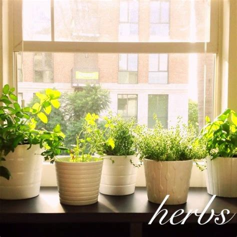 Best Apartment Herb Garden 117 Best Images About Apartment Gardens Horticool On