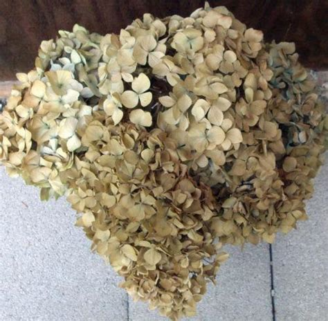 Antique Sconce Lights Dried Hydrangea Ebay