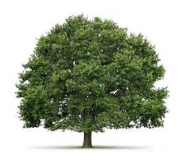 tree types fun facts about trees green sabah