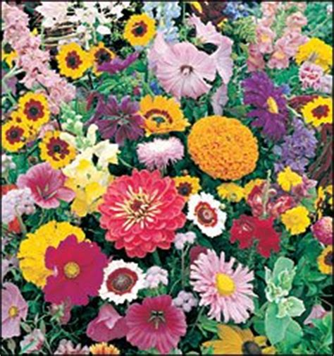Flower Roll Out Mat by Patio Lawn Garden Gardening Lawn Care Plants Seeds Bulbs Flowers