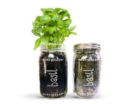 mason jar herb garden kit basil mason jar garden herb kit