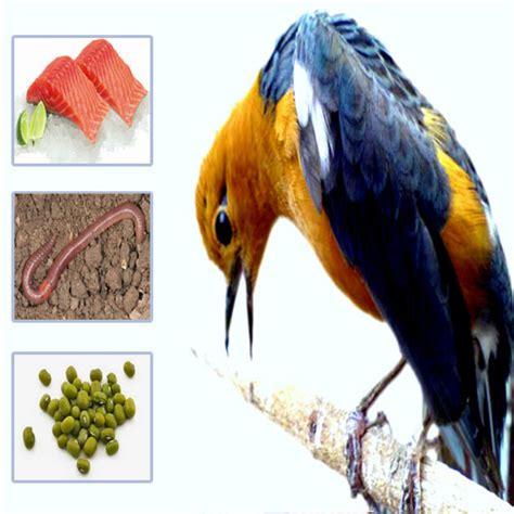Harga Pakan Burung Juara 2 racikan khusus pakan anis merah agar juara dan teler