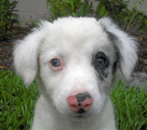pink nose puppy could skate the puppy be deaf the liberator
