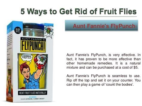 7 Ways To Get Rid Of Fruit Flies 5 ways to get rid of fruit flies