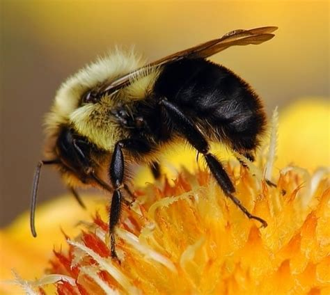 bumble bee empire pest control london