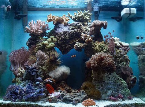 aquascaping live rock ideas csc111 lab 11 dftwiki