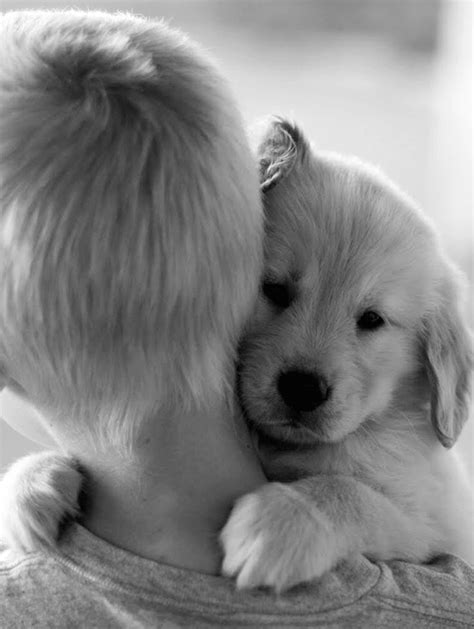 puppies hugging 26 dogs hugging their humans