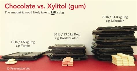 xylitol dogs as xylitol poisoning in dogs increases a portland vet calls for warning labels on