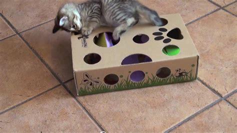 Jouet Pour Chaton Fait Maison by Cat Amazing Best Cat