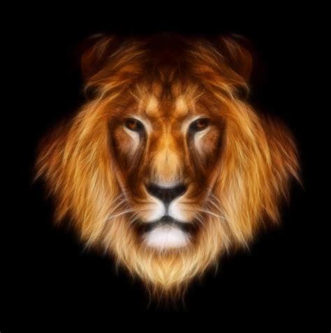 lion print artistic lion by aimelle