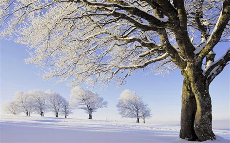 winter tree beautiful snow hd wallpaper 8 landscape wallpapers