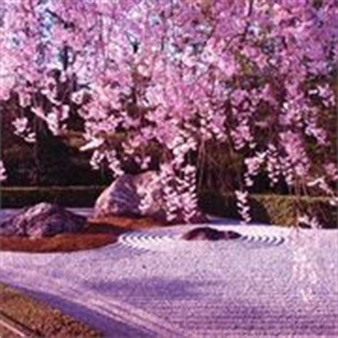 fiori giapponesi significato fiori giapponesi significato significato fiori