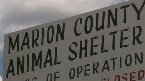 marion county pound marion county employee fired after cats removed from animal shelter found dead wpde