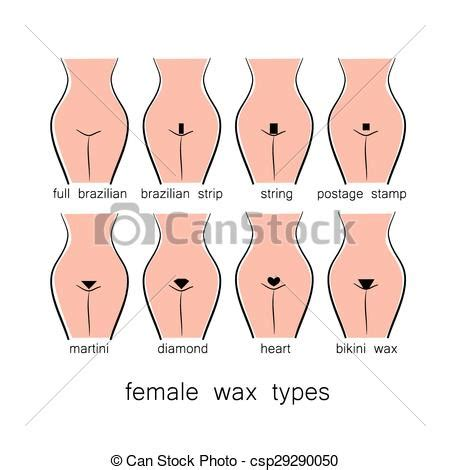 shaving brazilian style bikini design female wax types clipart vector search