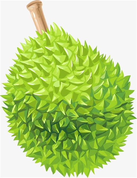 cartoon complete durian   fruit vector cartoon
