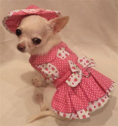 chihuahua puppy clothes 1000 ideas about chihuahua clothes on teacup chihuahua chihuahuas and
