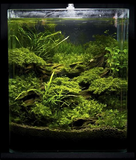 Aquascaping Inspiration by 1000 Images About Freshwater Inspiration On
