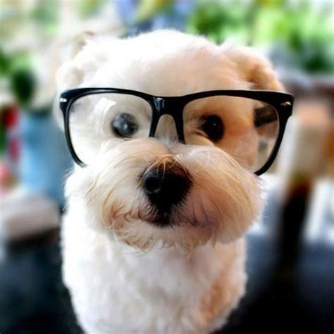 woof woof dog  coming   spot internet