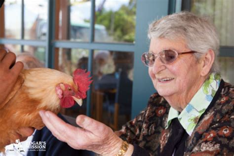 seniors get a lift when farm animals come to visit