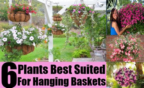 Best Plants For Hanging Planters by 6 Plants Best Suited For Hanging Baskets Diy Home