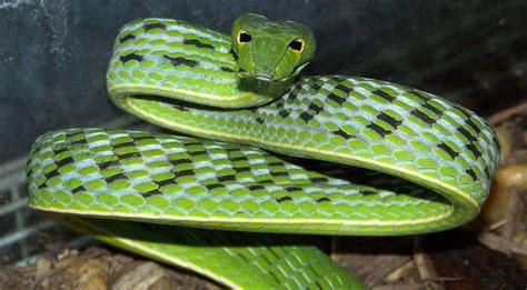 imagenes asombrosas de serpientes image gallery serpientes verdaderas