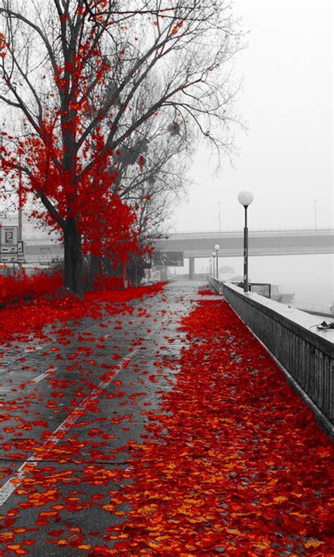 autumn wallpaper hd android red autumn hd wallpaper android phone