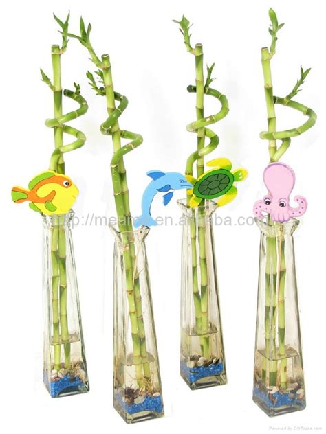 how to decorate a flower lucky bamboo dracaena sanderiana plant for indoor
