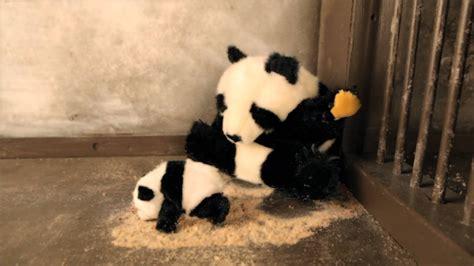 Sneezing Panda Meme - image gallery sneezing panda
