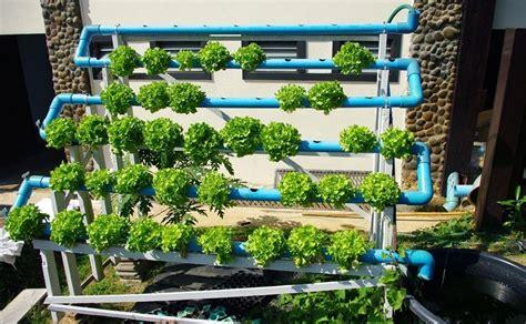 starting  outdoor hydroponic garden