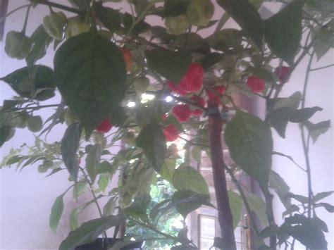 tanaman pangan  hortikultura balikpapan agrispace