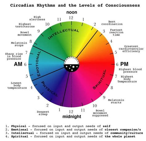 Light Sleeper Meaning by 53 Best Images About Circadian Rhythm On