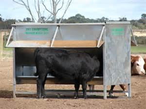Feeder Cattle Eglinton Agri Solutions Agri Tech Engineering Sa