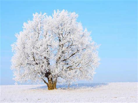 imagenes arboles invierno arboles en invierno imagui