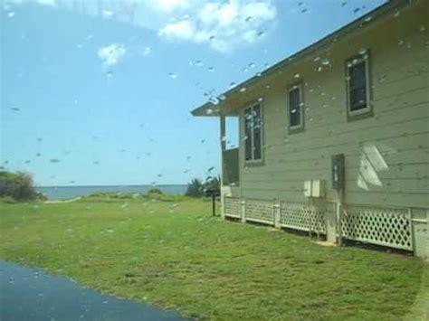barking sands cottages kauai barking sands cottages